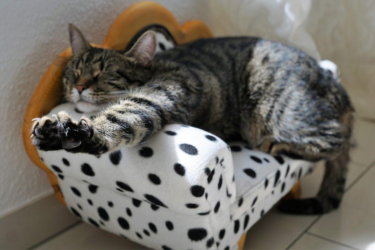 Kiégte-mint-a-másnapos-macska